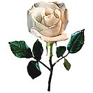 Delicate White Rose by Susan Savad