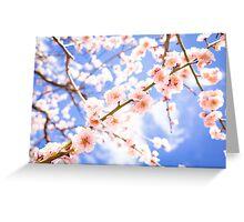 Spring flowers! SALE! Greeting Card