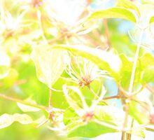 www.lizgarnett.com - Aug 02 by Liz Garnett