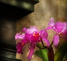 Cattleya Orchid by Mike  Savad
