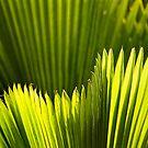 Natural Green Art by Steven  Siow