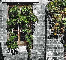 Window Ivy by George Petrovsky