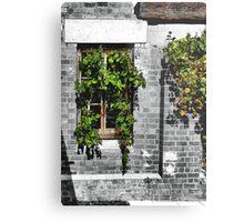 Window Ivy Metal Print