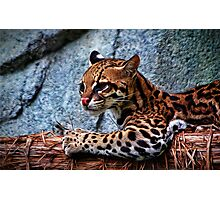 Ocelot Painted Photographic Print