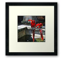 Scarlet Macaws Painted Framed Print