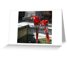 Scarlet Macaws Painted Greeting Card