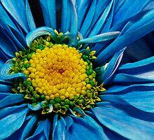Blue Daisy by Sheryl Kasper