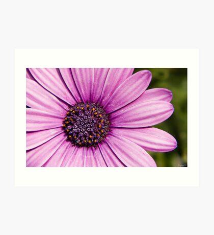 Flower details Art Print