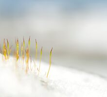 Winter Moss by Stephen Knowles
