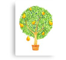 Pear Tree Canvas Print