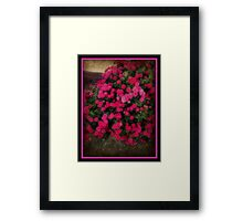 Mums With Texture Framed Print