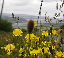 Flora  Burt Co. Donegal Ireland by mikequigley