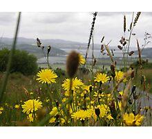 Flora  Burt Co. Donegal Ireland Photographic Print