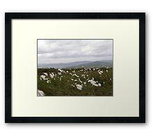 Bog Cotton Framed Print