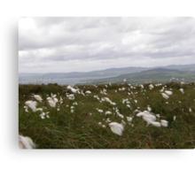 Bog Cotton Canvas Print