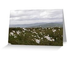 Bog Cotton Greeting Card