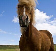 Talking Horses by ccostello