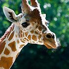 Gentle Giant by Jim Caldwell