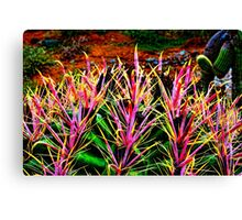 Red Spine Barrel Cactus Top Detail Canvas Print