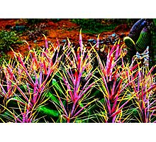 Red Spine Barrel Cactus Top Detail Photographic Print
