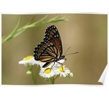 Butterfly and Blooms.. Poster