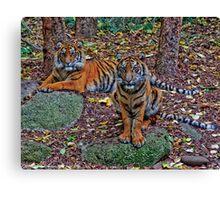 Tiger Siblings Canvas Print