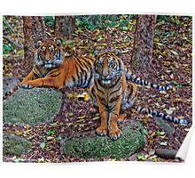 Tiger Siblings Poster