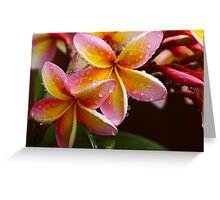 Summer Frangipanis Greeting Card