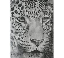 Up Close Leopard Photographic Print