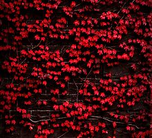 Red wall by Stephen Colquitt