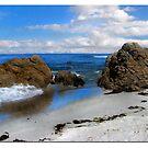 Relaxing in Monterey by Nikki Collier