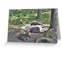 Elk Cow and Calf Greeting Card