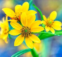 Wild Stone Mountain Yellow Daisies In The Fall by Mark Tisdale