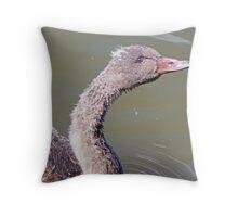 A Black Swan Cygnet Throw Pillow