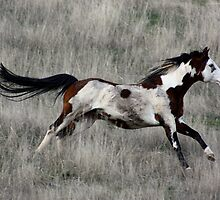 Running Free by Barrie Collins