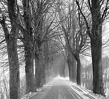 Winter road, Jizera mountains, Czech Republic by Lenka