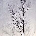Tree Lights by AllyNCoxon