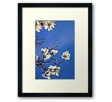 Magnolia Blossom Colour Spring Framed Print