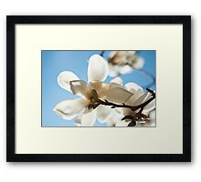 Magnolia Close up pale blue Framed Print