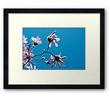 Pink Magnolia on a blue sky Framed Print