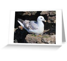 Fulmar Petrel, Shetland Greeting Card