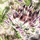 Cactus by Emasher