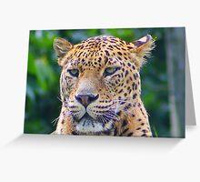 Leopard Portrait..... Greeting Card