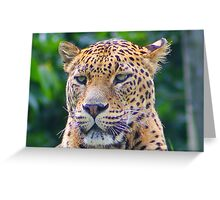 Leopard Portrait..... Greeting Card