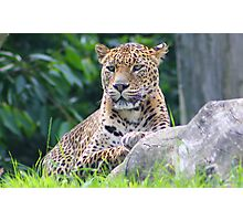The Sri Lanka leopard.... Photographic Print