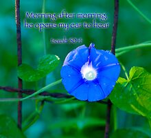 Morning after morning. . . by Bonnie T.  Barry