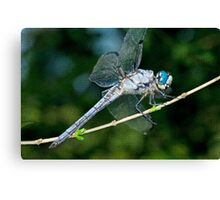 Great Blue Skimmer Dragonfly Canvas Print