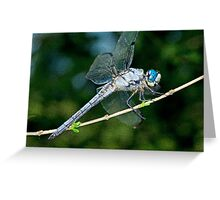 Great Blue Skimmer Dragonfly Greeting Card