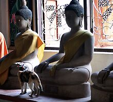 Buddhas And Cat by Dave Lloyd