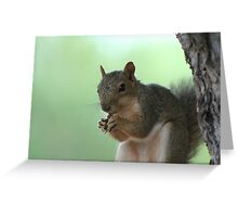 My Nut Greeting Card